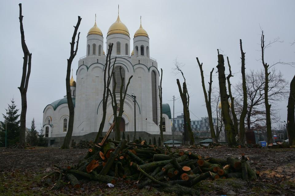 В 2018 году деревья у собора Христа Спасителя очень сильно обрезали. В 2021 году выяснилось, что 11 из них совершенно сухие.