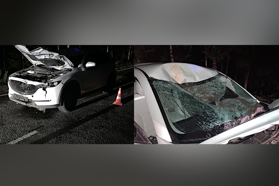 В Тверской области за ночь два водителя сбили лосей. Фото: пресс-служба ГИБДД по Тверской области.