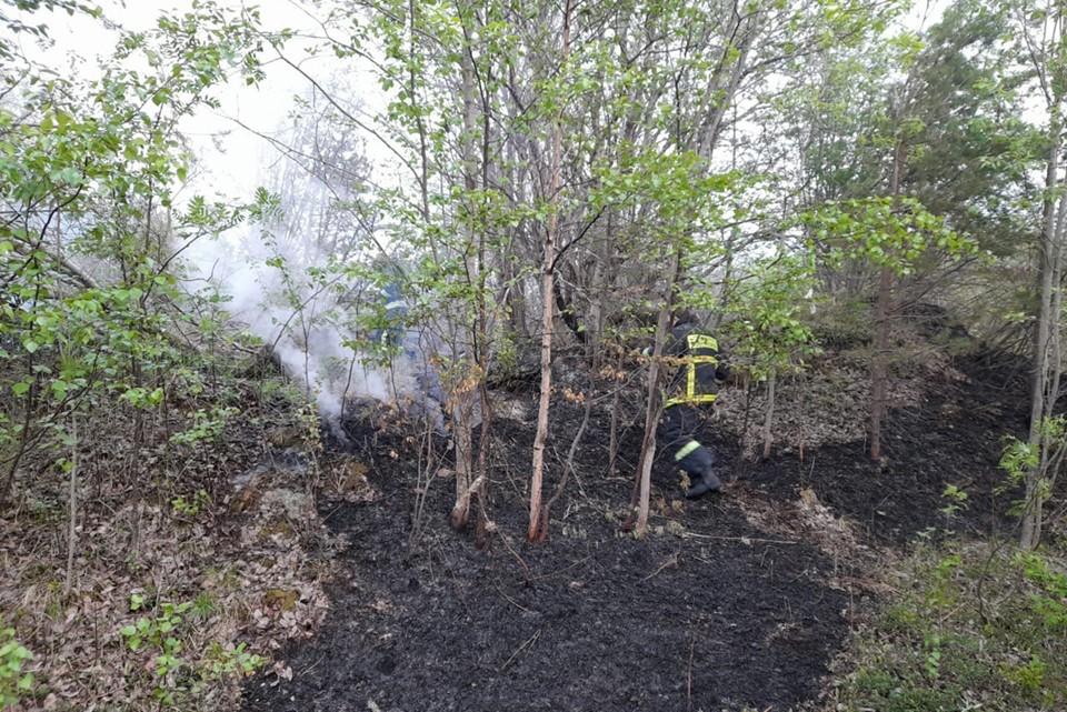 Северянам напоминают, что в лесу надо вести себя, как в гостях: аккуратно, не разводить костры и не курить. Фото: Ирина Самарина / vk.com/id71733344