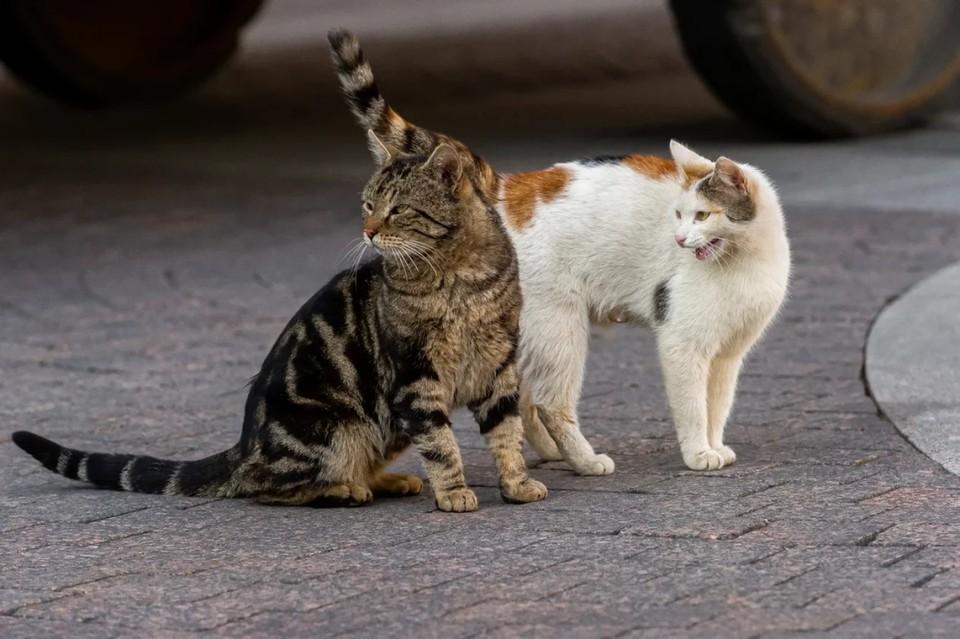 В Петербурге ищут специалистов по кастрации бездомных котов.