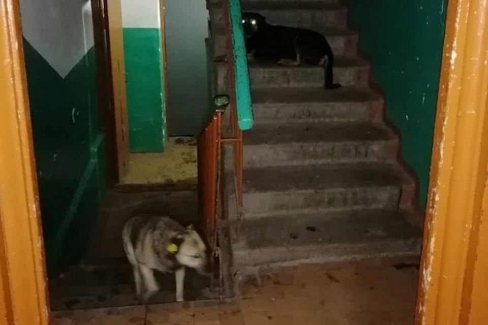 Собаки рычали на проходящих мимо жильцов. Фото: МЧС ЛНР
