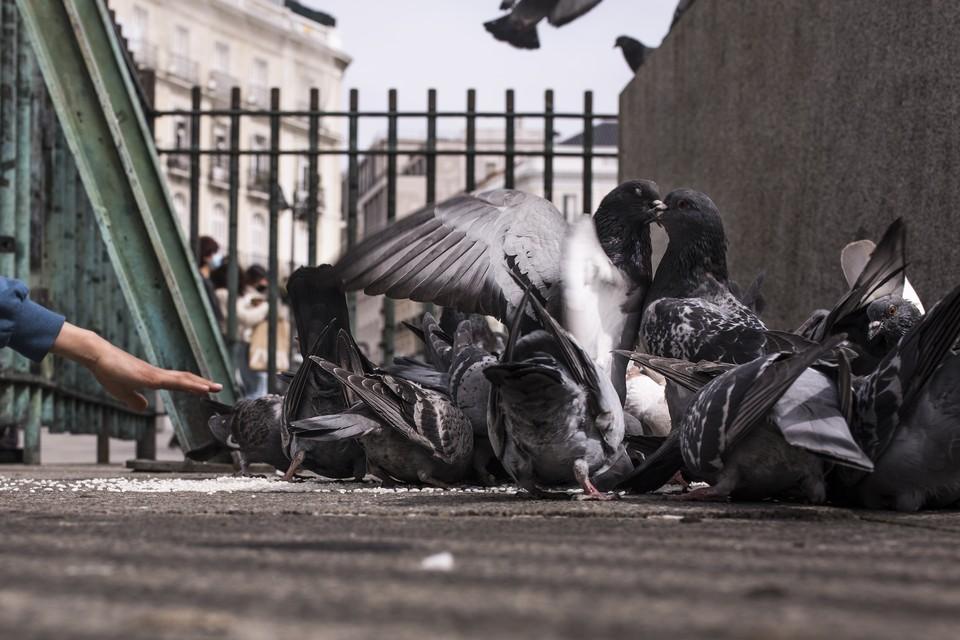 Из-за пандемии необходимо постоянно проветривать залы дворца, поэтому голуби из соседнего парка чувствуют в стенах дворца себя как дома.