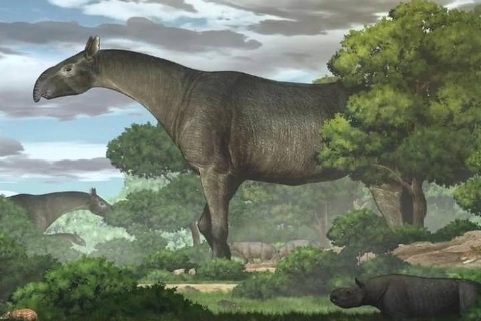 Современный носорог (внизу) и его предок циклопического размера.