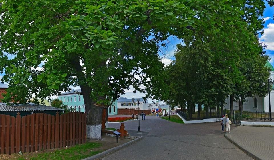 Дерево внесено в Национальный реестр старовозрастных деревьев России