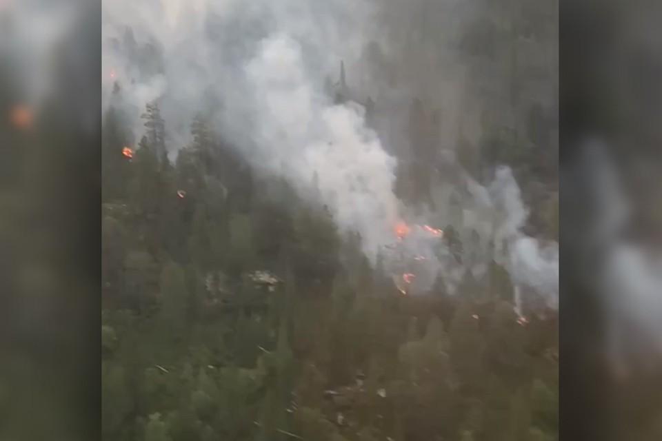 В Кольском районе сейчас горит лес. Фото: Скриншот видео.