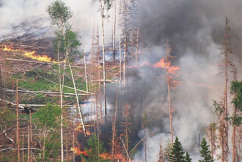 В Красноярском крае действуют 8 лесных пожаров. Фото: Виктор ЧАВАЙН