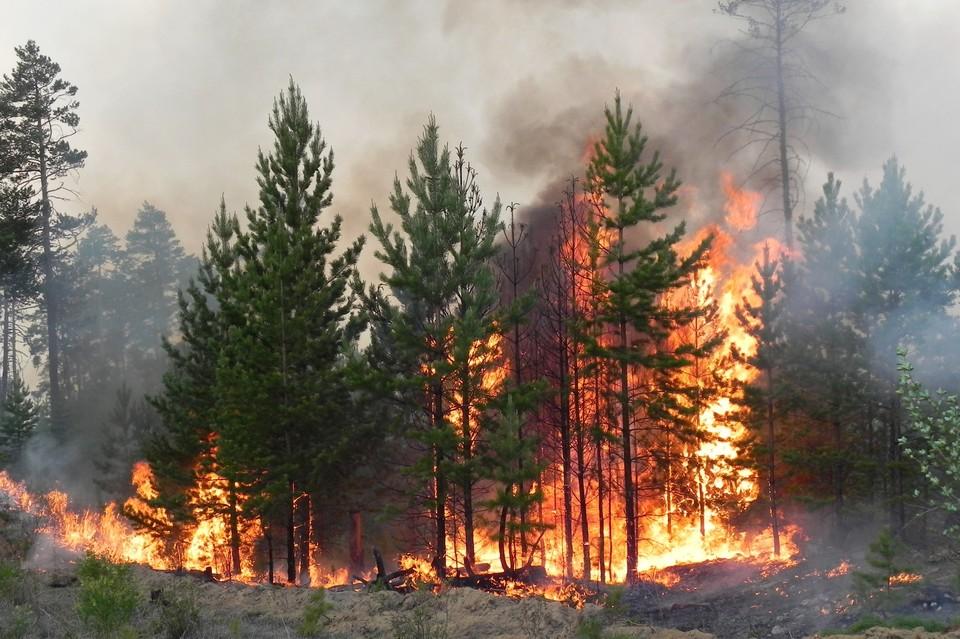Пожары бушуют в Карталинском, Нагайбакском и Увельском районах. Фото: Администрация Карталинского МР/vk.com