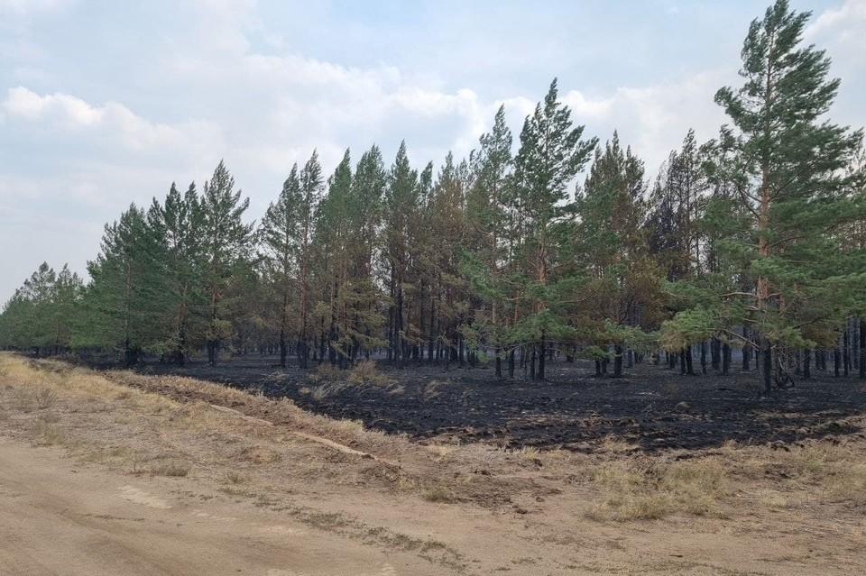Последствия пожара в Парижском лесничестве. Фото: правительство Челябинской области