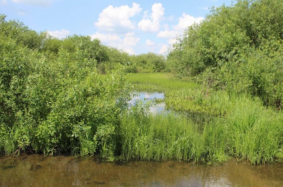 Река Быстрица сопротивляется загрязнению, в одном из ее рукавов вода все еще прозрачная