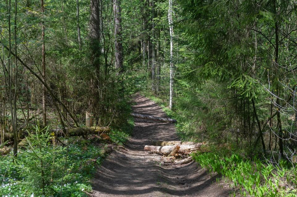 Появилось приложение для пеших прогулок по Ленобласти