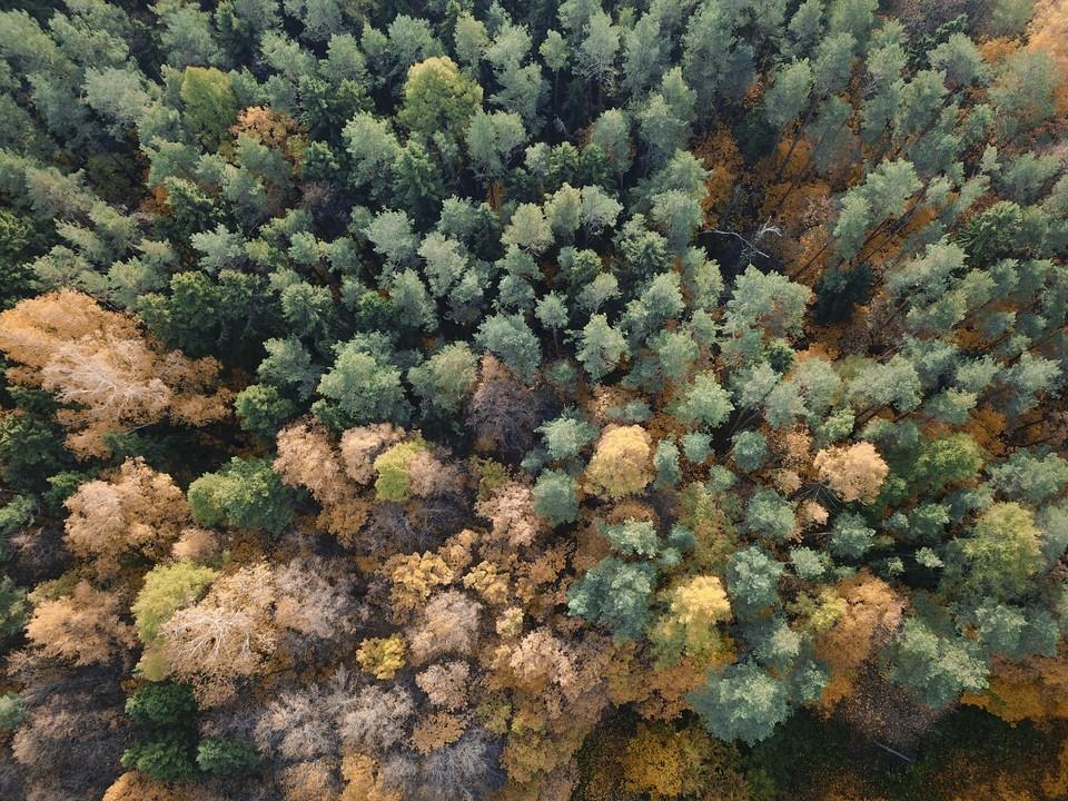 Подмосковье из-за высокой пожароопасности ограничивает вход и въезд в леса до 19 июля 2021