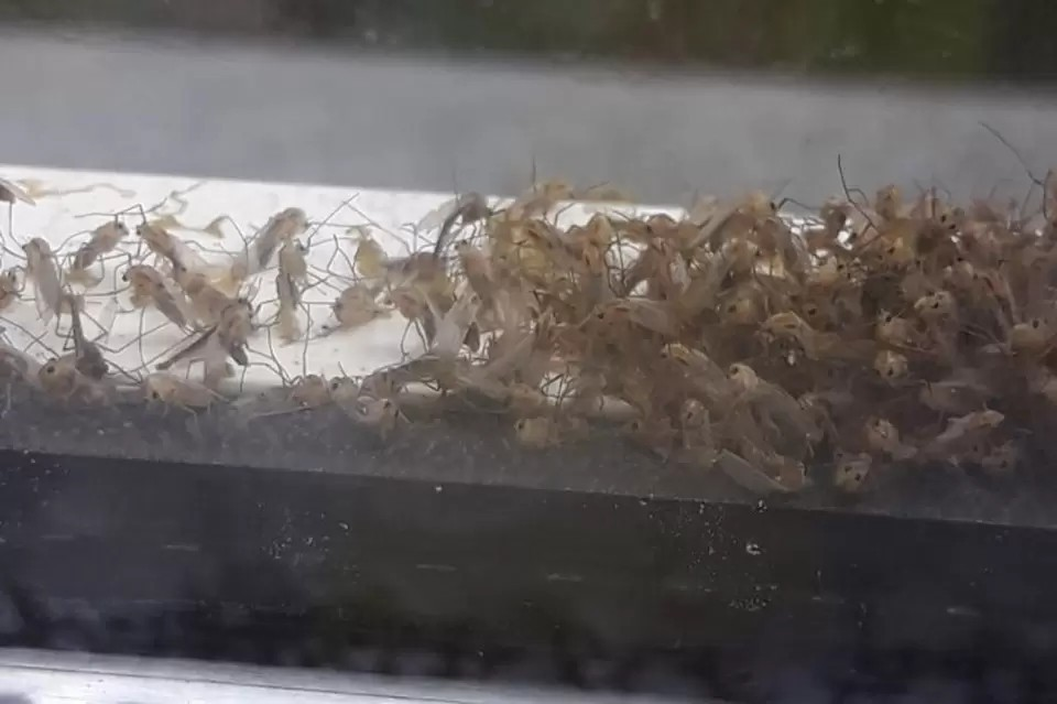Комары - главные переносчики возбудителей лихорадки