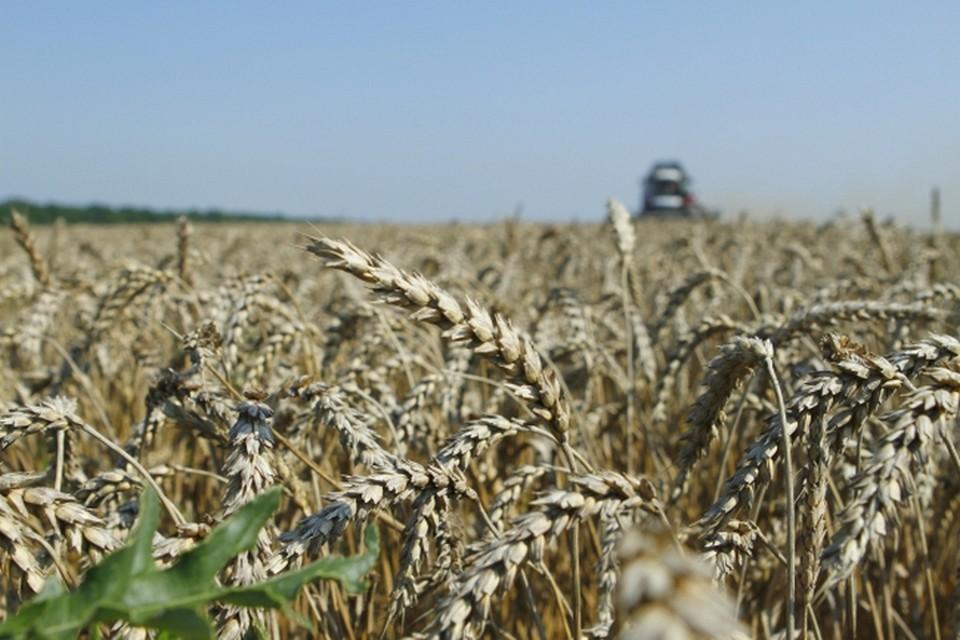В результате засухи в республике пострадали посевы 335 хозяйств