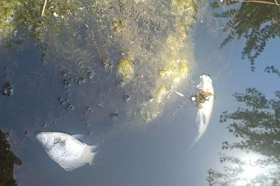 В Ростовской области выясняют причину гибели рыбы в Тацинском районе. Фото: правительство РО