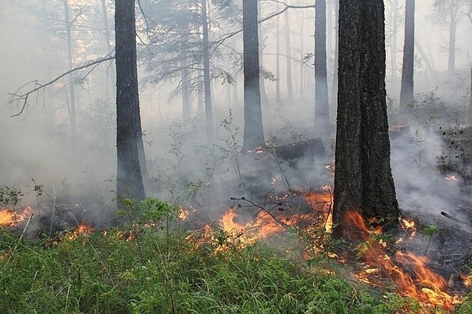 Дым от лесных пожаров окутал пять районов Иркутской области