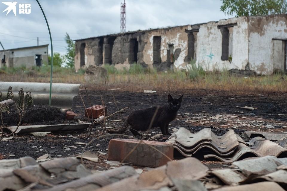 Лесной пожар уничтожил несколько десятков жилых домов.