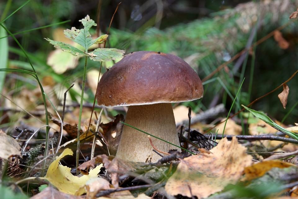 Напоминаем, на что обратить внимание при сборе и приготовлении грибов