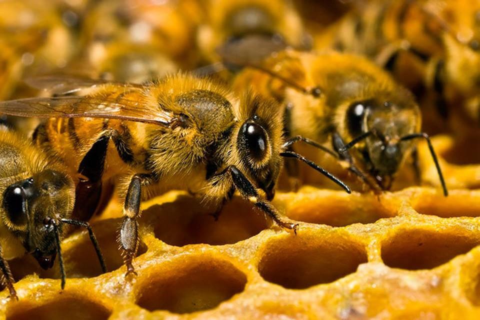 В Удмуртии гибнут пчелы. Фото: pixabay.com