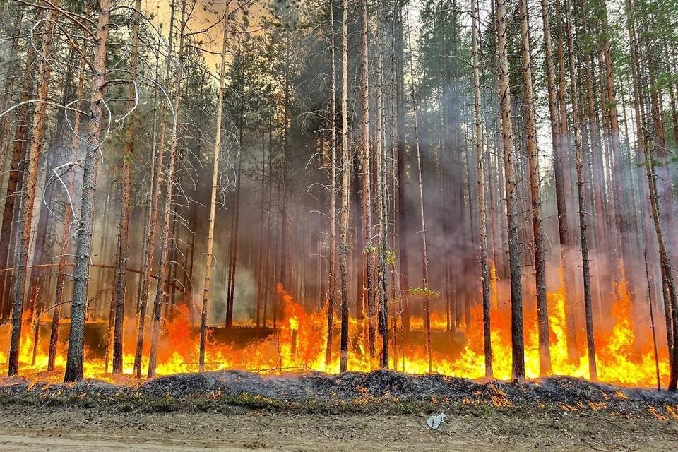 В Карелии полыхают леса. Фото: Артур Парфенчиков / vk.com/id419407976