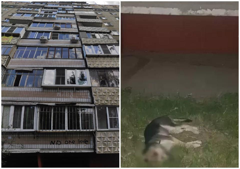 Щенок упал из окна 8 этажа и вскоре умер. Фото: читатель КП