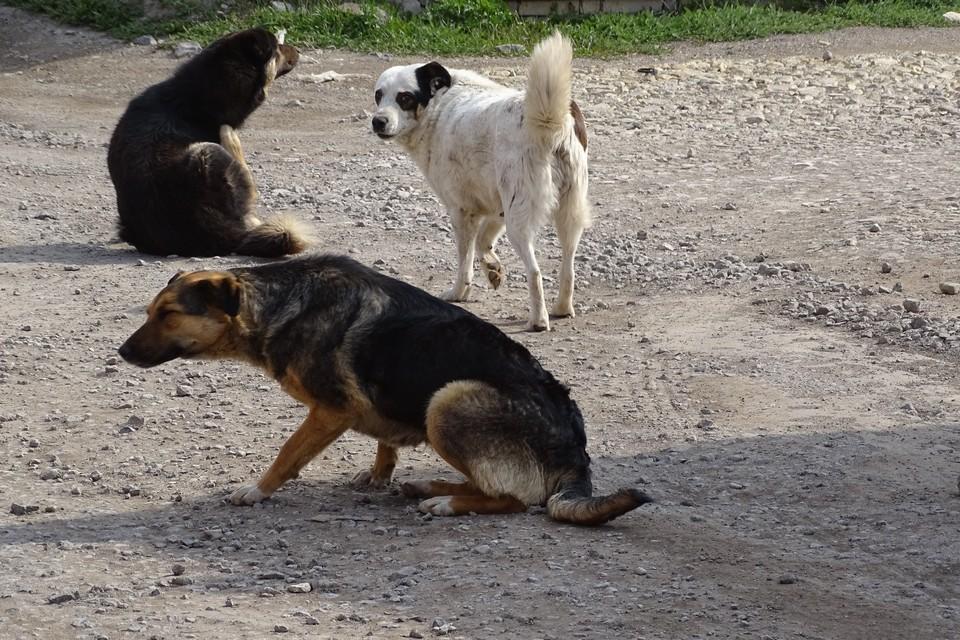 Липчане жалуются на дворовых псов