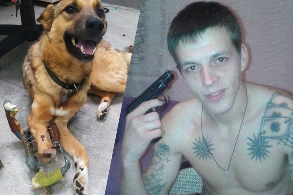 После выстрела собаке пришлось ампутировать лапу. Фото: личный архив Валерия Чусовитина, страница в соцсети