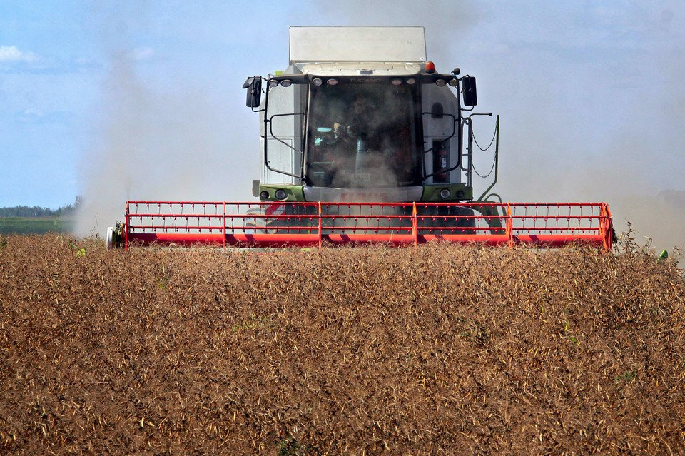 Зерно пойдет на птицефабрики, производство кормов и населению.