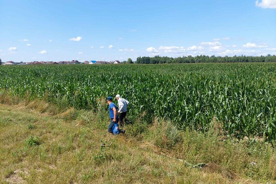 Мужчина почти два часа плутал по кукурузному полю - хотел сократить путь до магазина. Фото: МЧС.