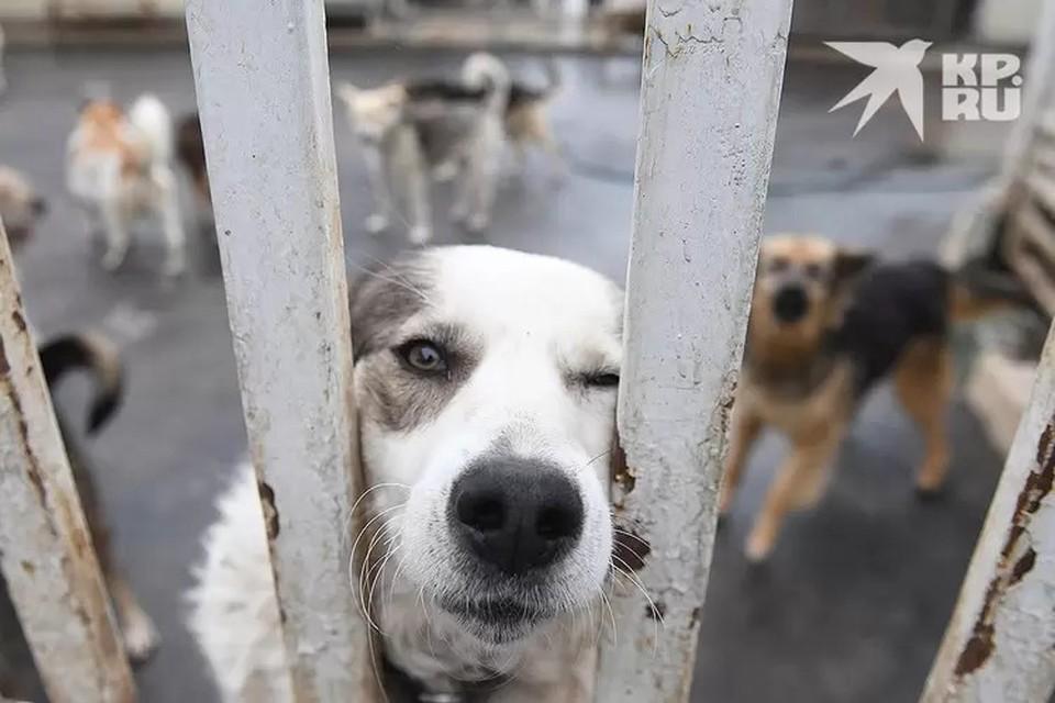Региональная власть планирует заняться решением вопроса с бездомными собаками.