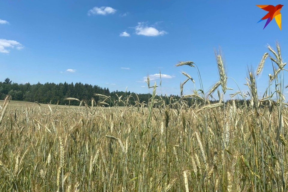 Лукашенко заявил, что нужно ускориться с уборкой урожая