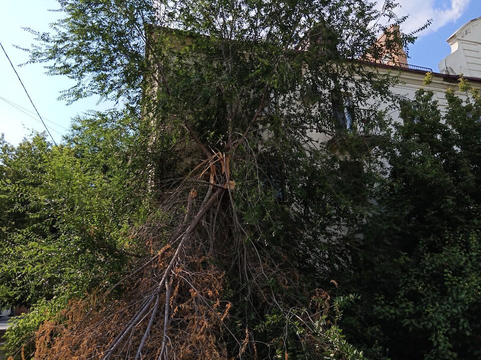 Волгоградцев при усилении ветра просят не стоять под деревьями, которые могут рухнуть