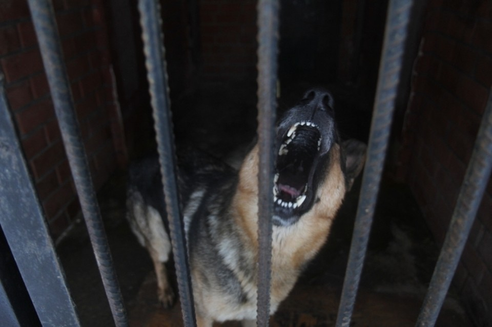 Хозяйская собака напала на ребенка в Перми.