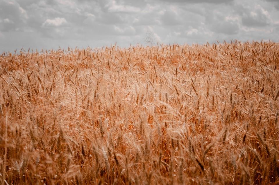 Орловские аграрии намолотили три миллиона тонн зерна