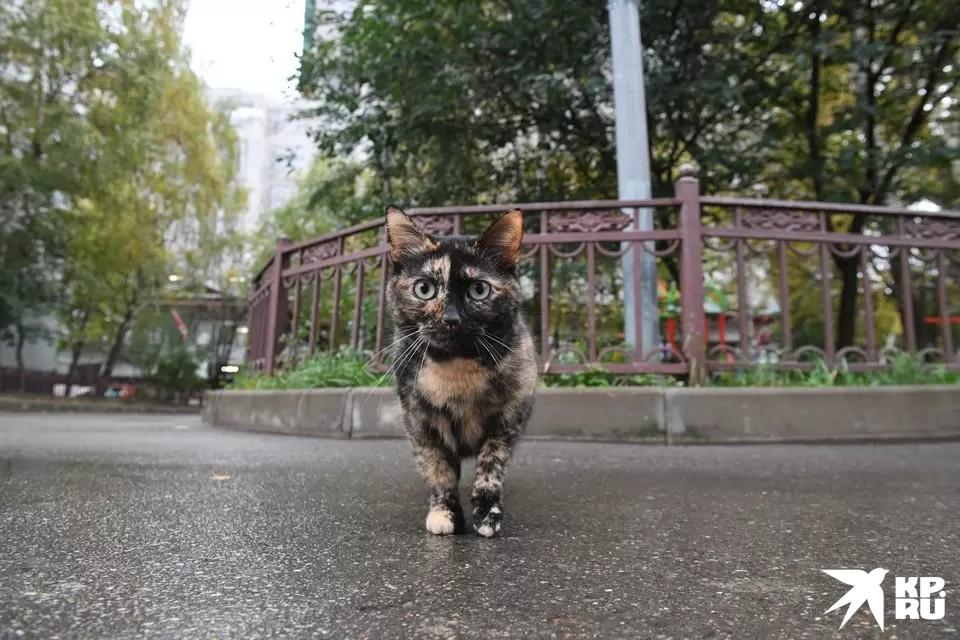У котика шуба, а людям пора утепляться - осень настала!