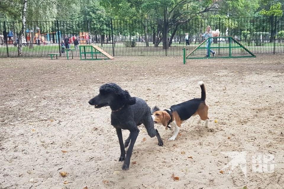 В Горроще торжественно открыли площадку для выгула собак. Были и депутаты.