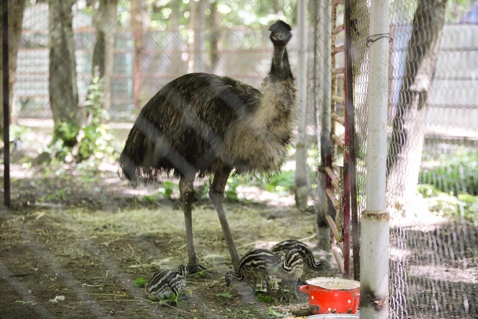 Мужчины залезли в вольер со страусами и закидали птиц камнями в Краснодарском крае