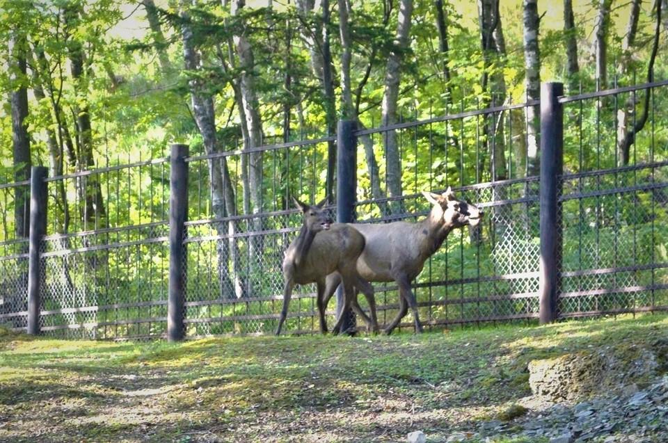 Коллекцию животных пополнили самец и две молоденькие самки. Фото: пресс-служба Сахалинского зооботанического парка