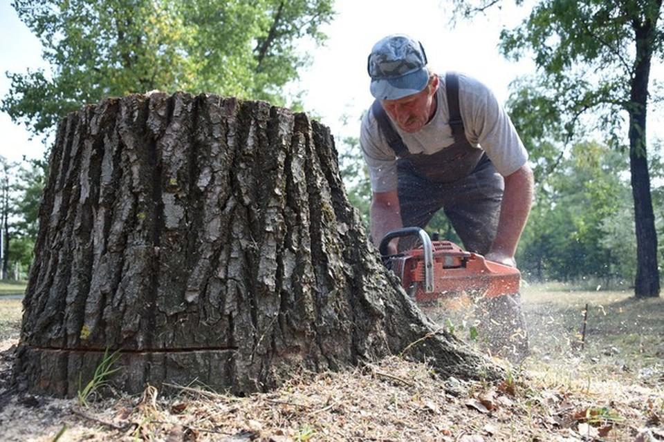 Спил каждого дерева согласован со специальной комиссией.