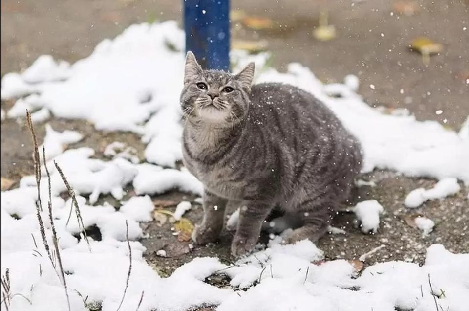 Когда в Краснодарском крае выпадет первый снег.