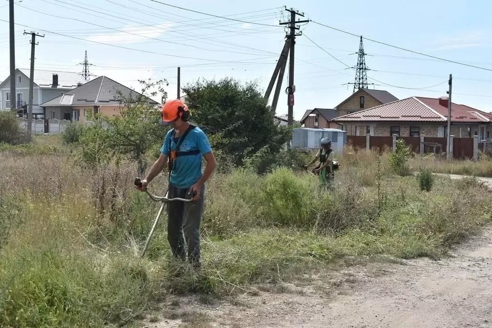 Под Симферополем продолжают бороться с опасным растением. Фото: пресс-служба администрации крымской столицы