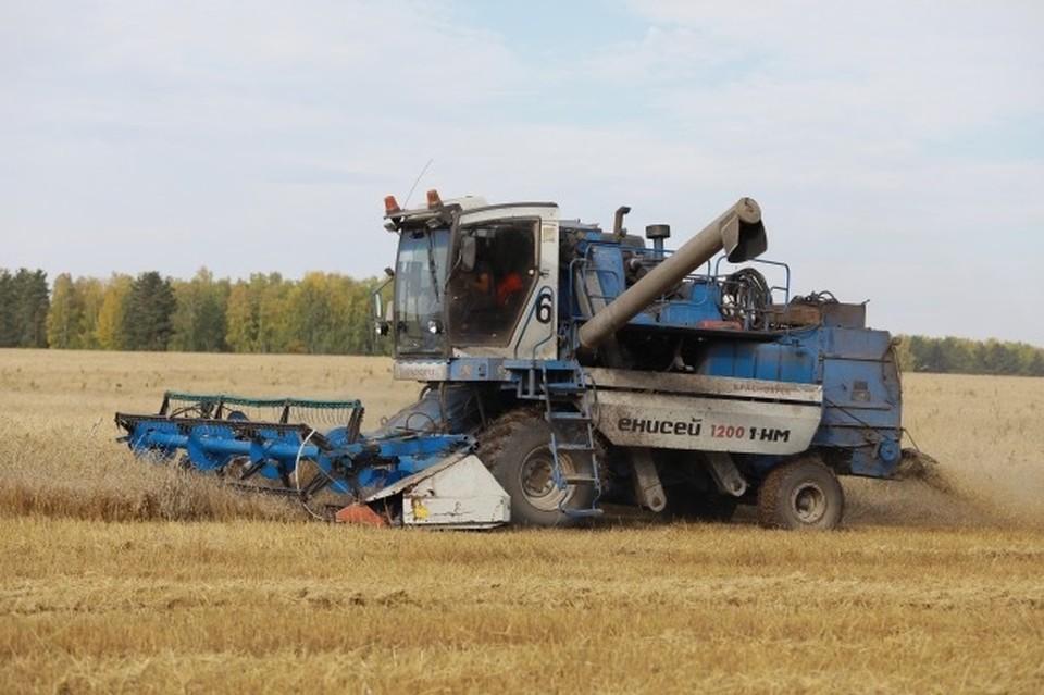 Рекордный урожай зерна соберут в Смоленской области в 2021 году.