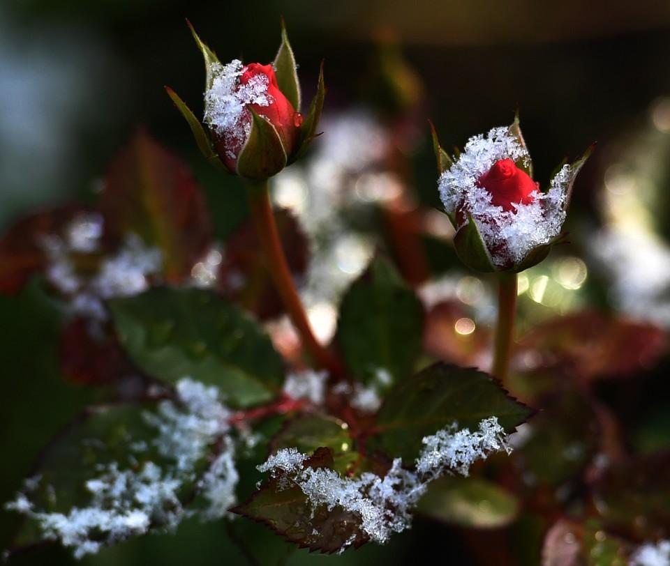 В сентябре теплые дни могут сменяться прохладными, но значит ли это, что скоро придут заморозки?