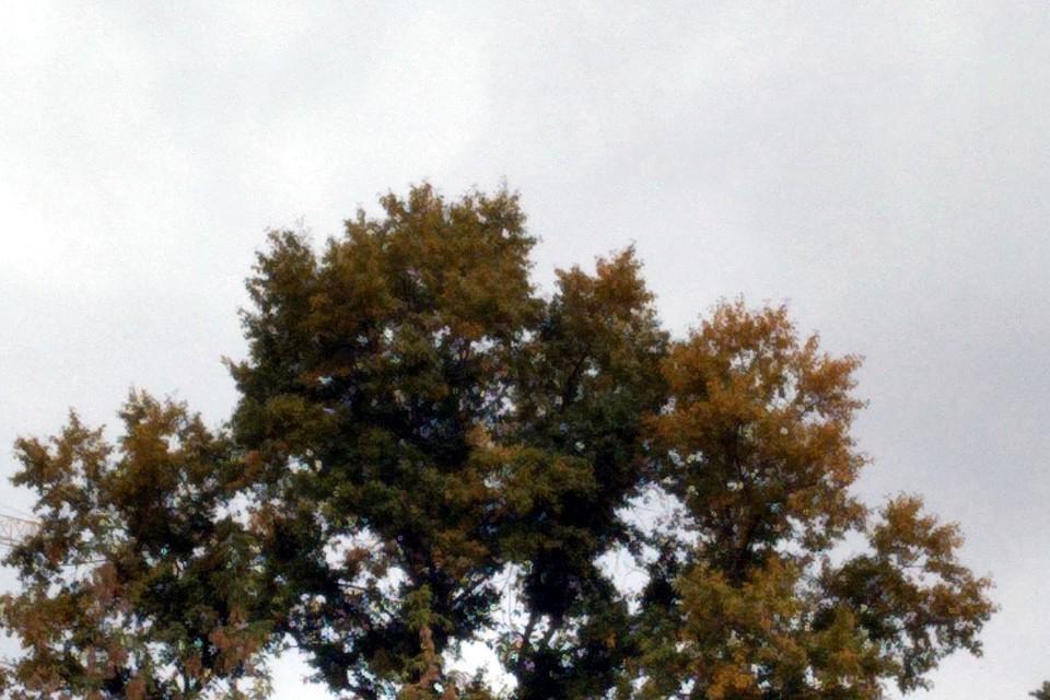 Осень вступает в свои права.