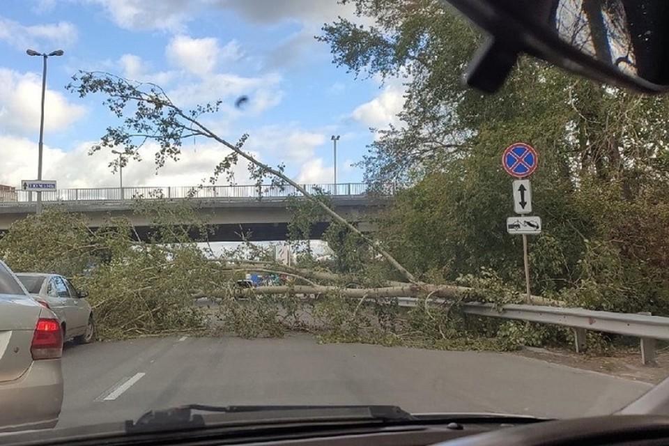 Дерево упало прямо на проезжую часть Фото: группа ВКонтакте Инцидент Екатеринбург