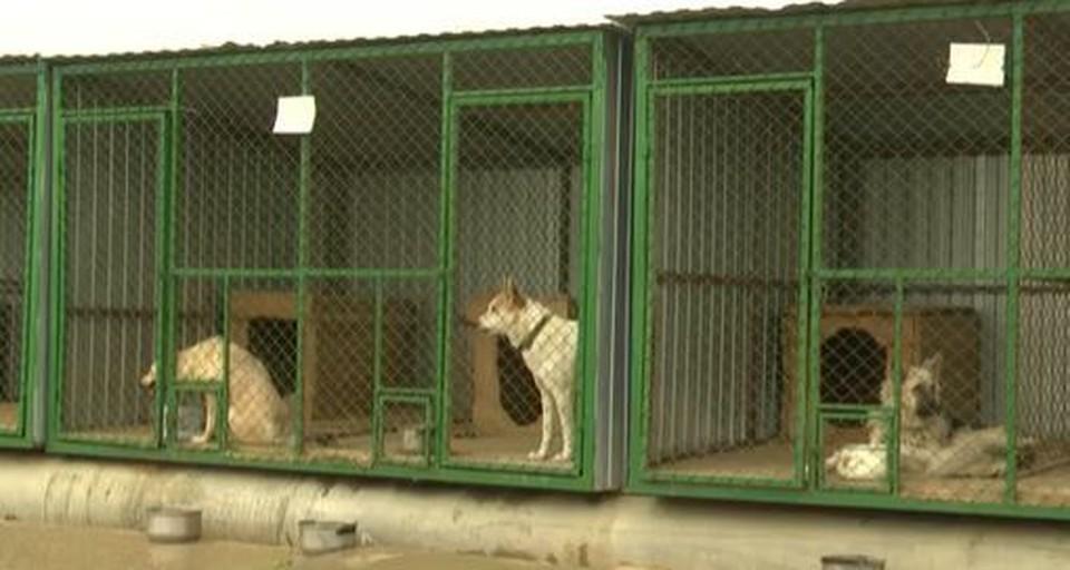 В Нягани выделили участок для будущего приюта для собак. Скриншот из видео.