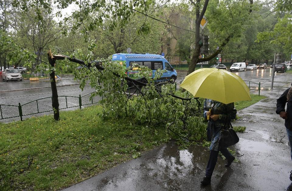 Кратковременные дожди и грозы ожидаются в Смоленской области 13 сентября.