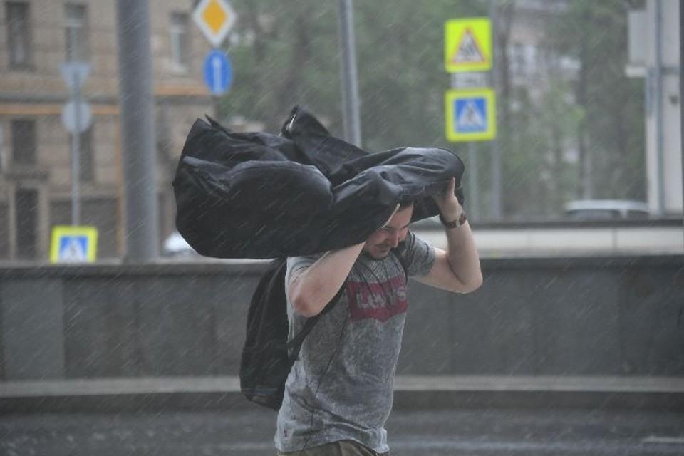 В Ярославской области МЧС предупредило о сильных порывах ветра
