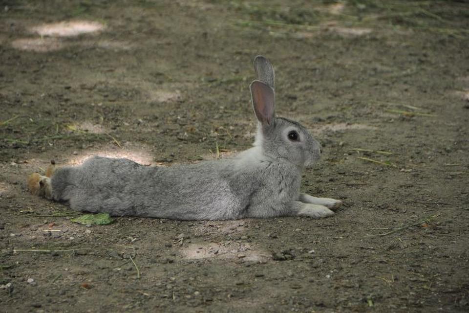 В Ярославской области 15 сентября откроется сезон охоты на лисиц и зайцев