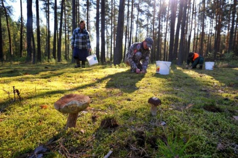 Поиски заблудившихся грибников продолжались до 2 часов ночи