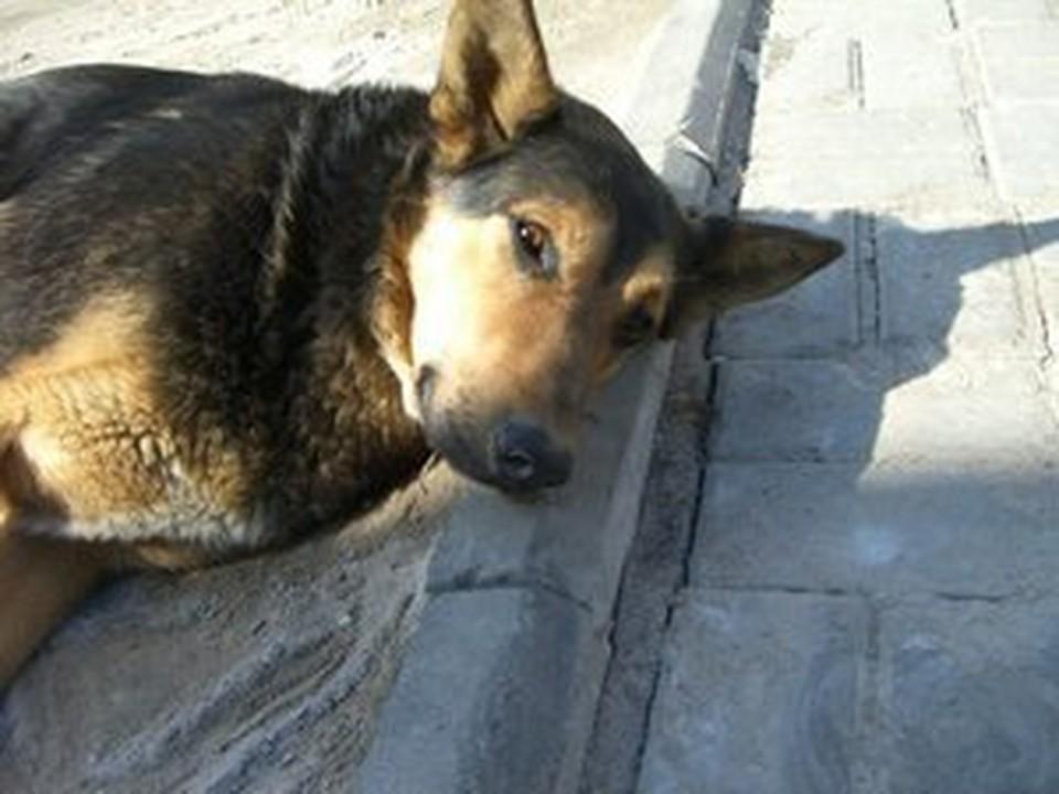 Собаки Красносельского района не знают, почему к ним столько внимания